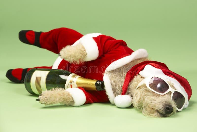 Dog In Santa Costume. Studio Portrait Of Dog In Santa Costume