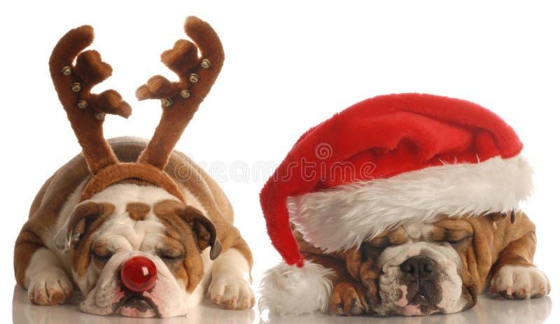Dog santa and rudolph royalty free stock photo