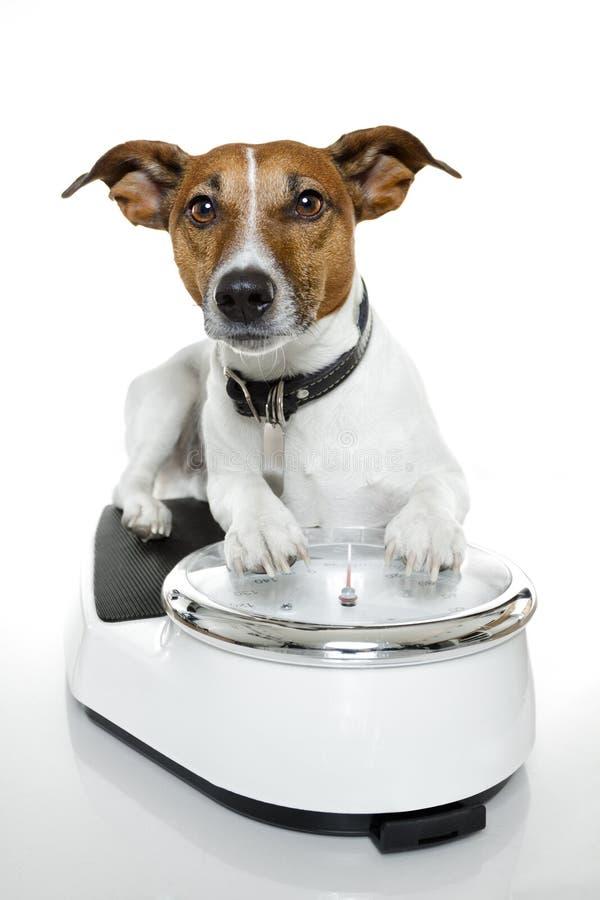 Dog scale stock image