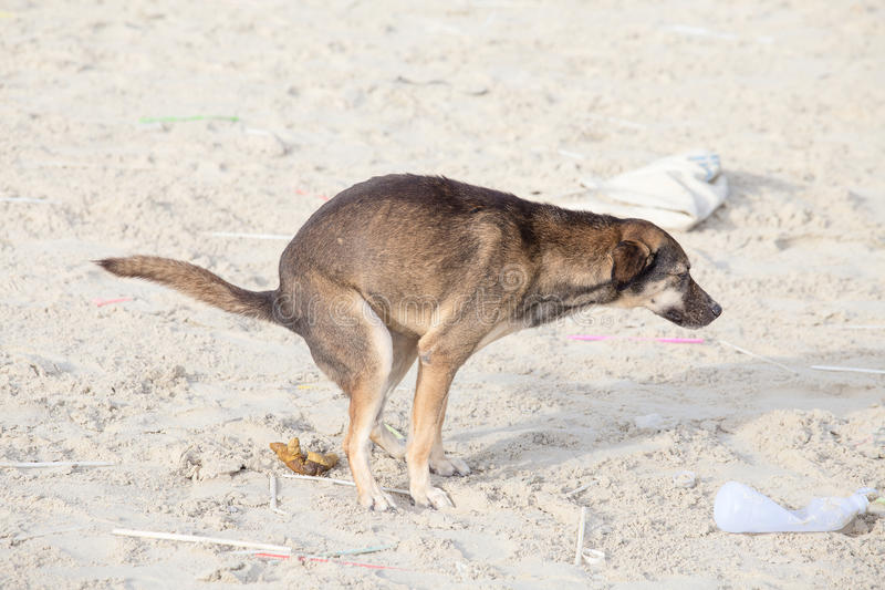 Dog scat on the beach. Thailand royalty free stock photo