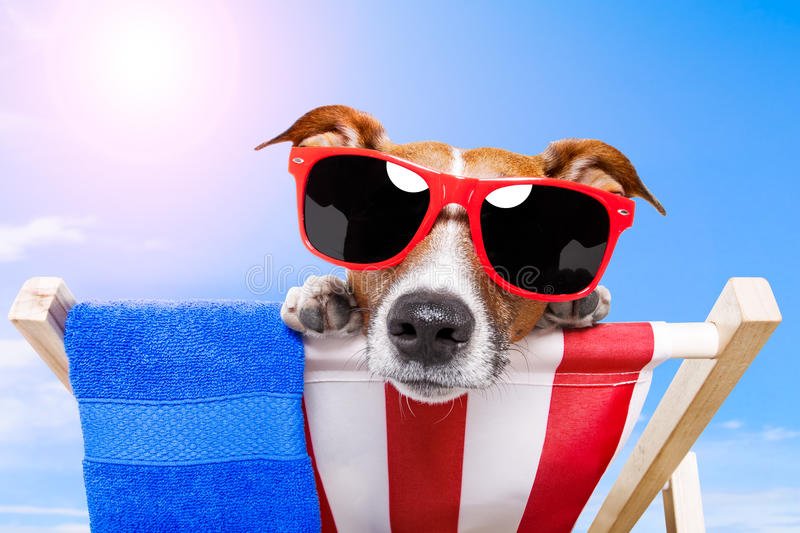 Dog with schades. Dog with red shades on a deck chair