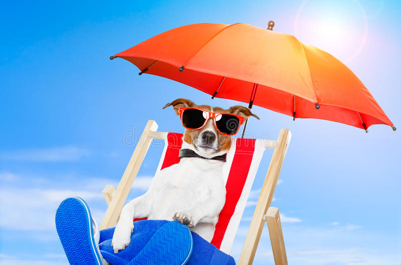 Dog with schades stock image
