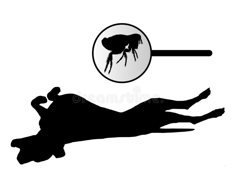 Dog is scratching its back because of fleas bite royalty free illustration