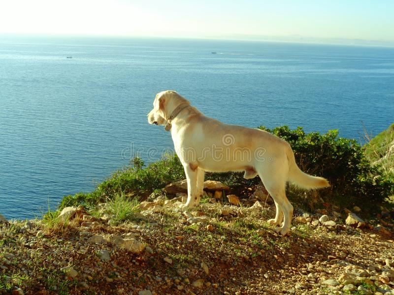 Dog and the sea stock image
