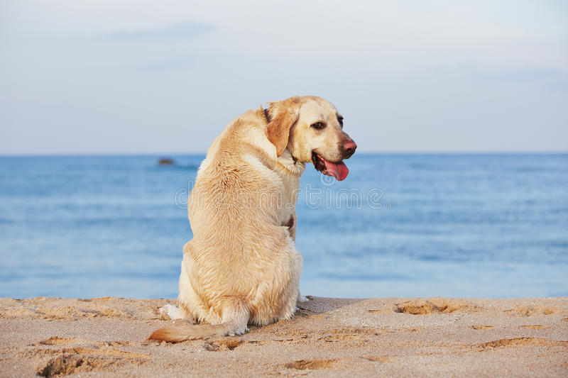 Download Dog And Sea Royalty Free Stock Photos - Image: 33177948
