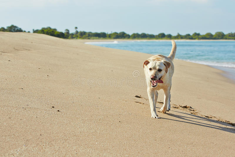 Download Dog and sea stock photo. Image of vacations, alone, animal - 33177982