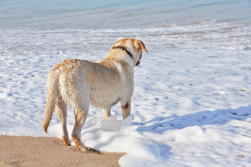 Download Dog and sea stock photo. Image of play, adorable, bodies - 33178348