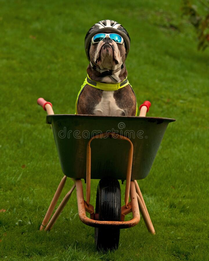Free Dog Seat Protected In Its Own Bike Stock Photo - 174911420