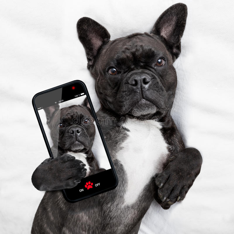Dog Selfie In Bed Stock Photo Image Of Mobile Photo