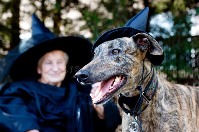 Dog and Senior in witch costume. Greyhound dog and senior lady in witch costume stock image