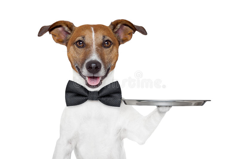 Download Dog service tray stock photo. Image of hold, canine, presentation - 25975912