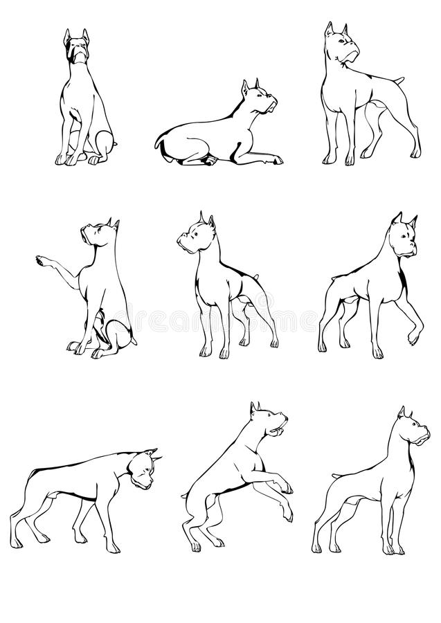 Download Set of dog sketches stock vector. Image of poses, sketches - 38631545