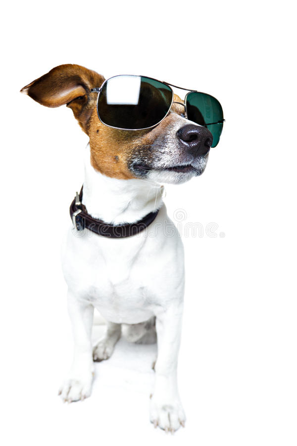 Dog in shades royalty free stock photography