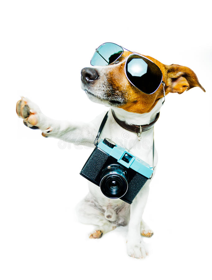 Dog with shades and a photo camera royalty free stock image