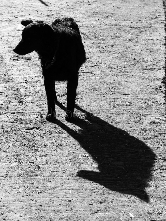 Download Dog shadow stock photo. Image of faithful, watchdog, friend - 418804