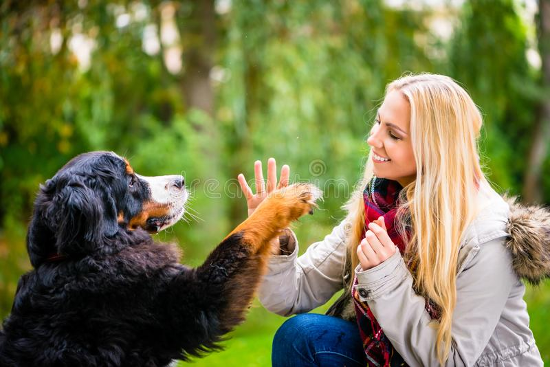 Dog shaking hands with paw to his woman royalty free stock photo