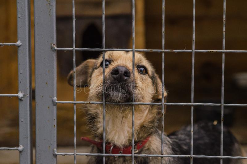 Dog in shelter eyes of an abandoned animal in captivity. A dog in a shelter with the eyes of an abandoned animal in captivity a dog behind bars royalty free stock images