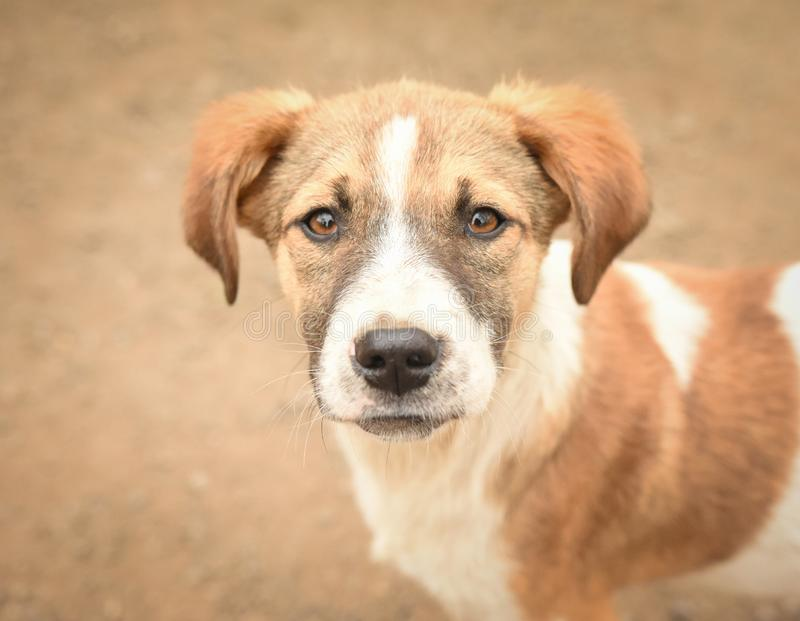 Dog from a shelter royalty free stock images