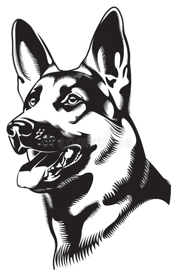 Dog. Shepherd vector illustration