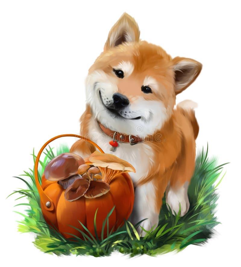Dog Shiba Inu och en korg av champinjoner royaltyfri illustrationer