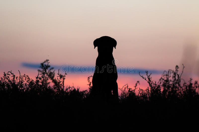 Dog silhouette. Silhouette of a dog on sunset scenery in Danube delta stock image