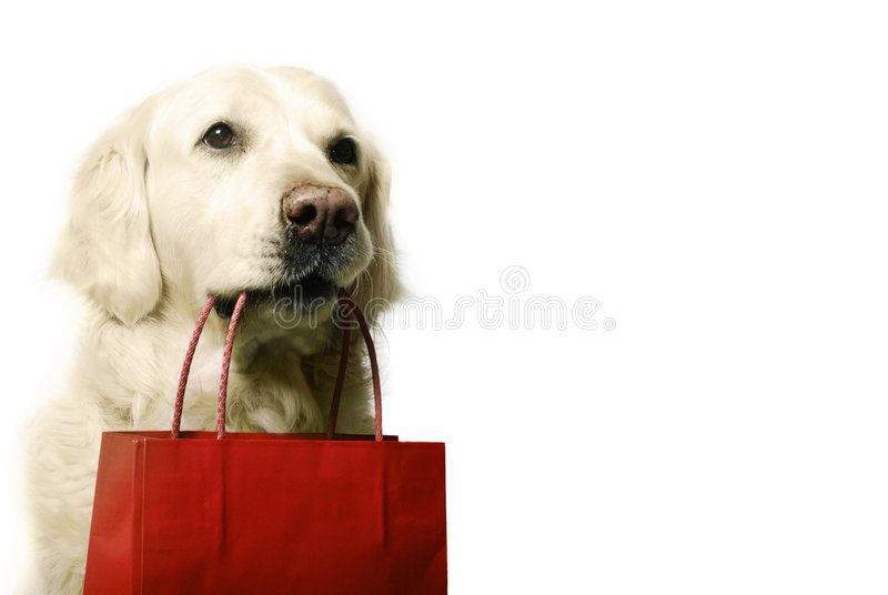 Dog shopping. Golden retriever dog with red shopping bag