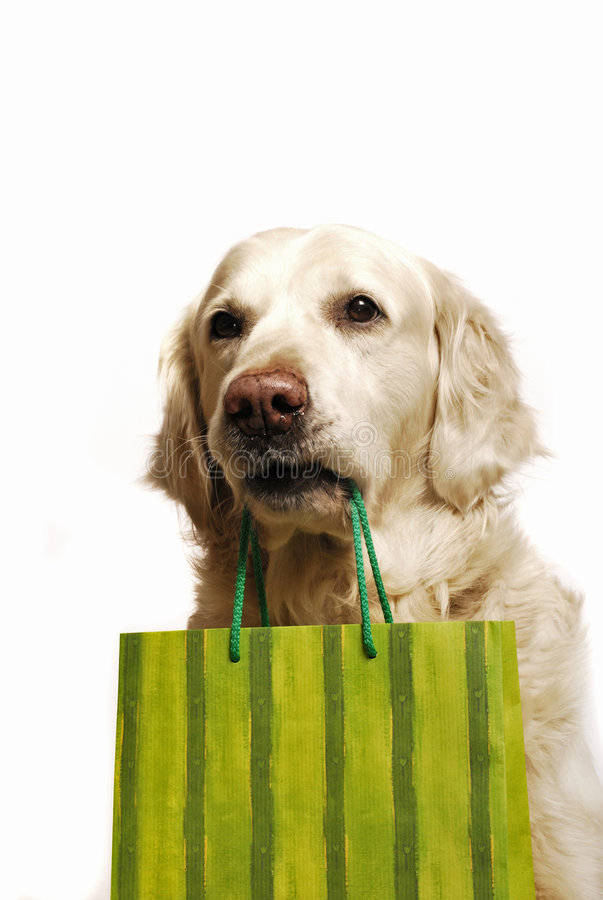 Dog shopping. Golden retriever dog with red shopping bag