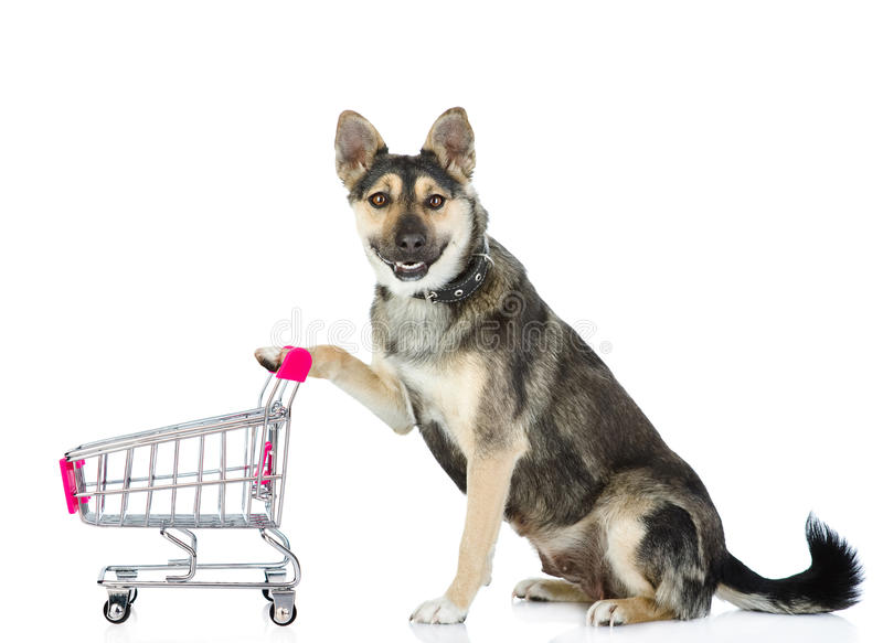 Dog with shopping trolley. on white background royalty free stock photography