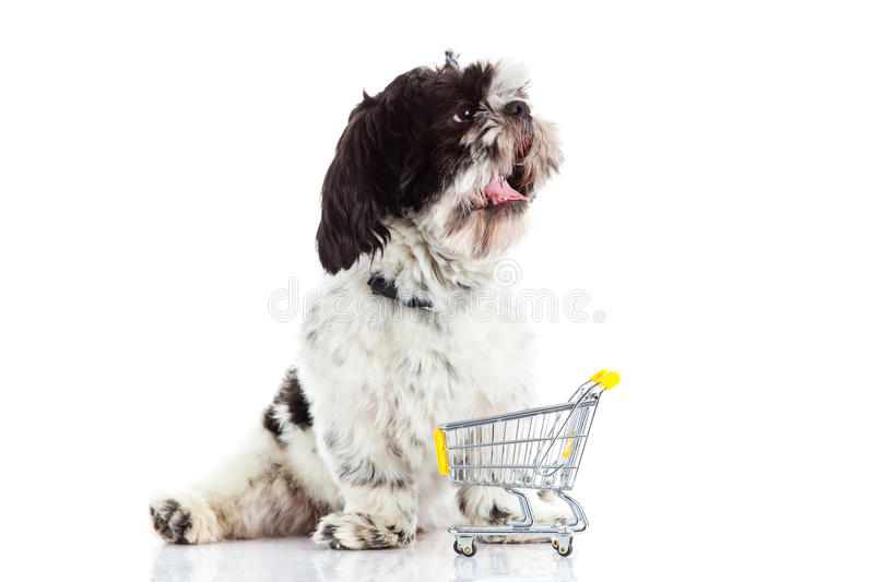 Dog with shopping trolly on white background stock photography