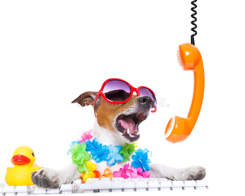 Dog shouting on the phone stock photos
