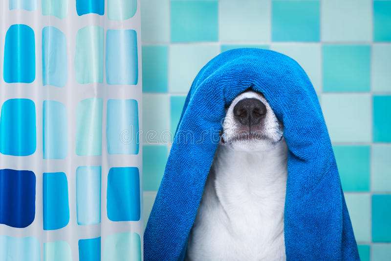 Dog in shower or wellness spa stock photos