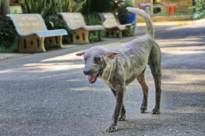Dog that are sick are skin diseases.  stock images