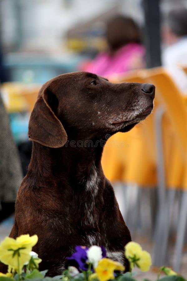 dog side profile stock image image of outdoors canine 12286175. Black Bedroom Furniture Sets. Home Design Ideas