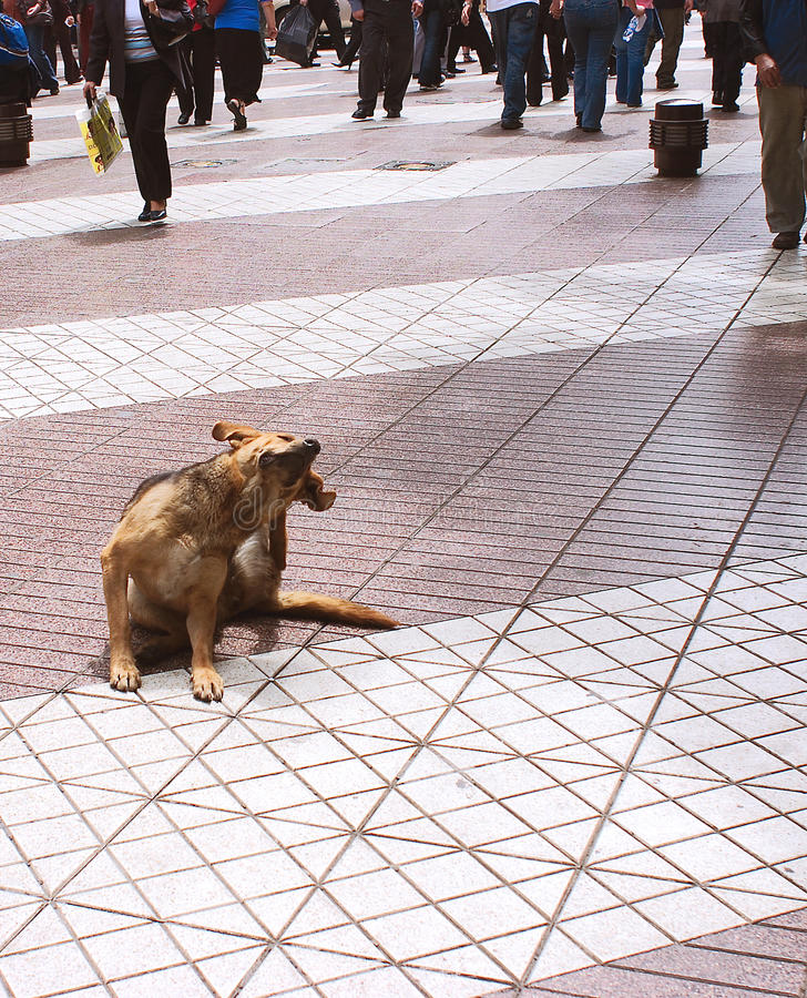 Dog on sidewalk. Close up of dog sat on paved sidewalk with pedestrians in background royalty free stock photo