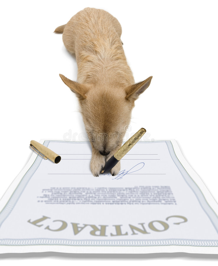 Dog - Signing A Contract Stock Photo - Image: 7626180