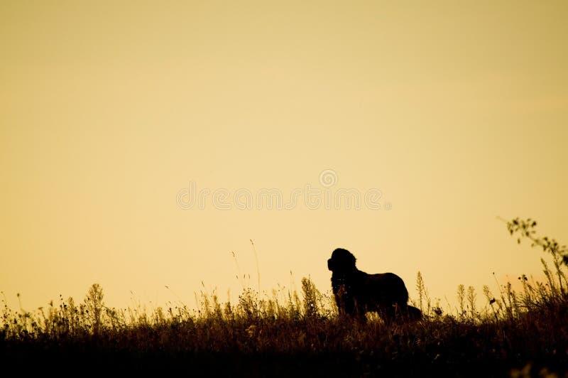 Download Dog silhouette stock photo. Image of conceptual, solitude - 26842146