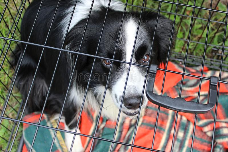 The dog sits in the cage behind the bars and looks sadly royalty free stock images