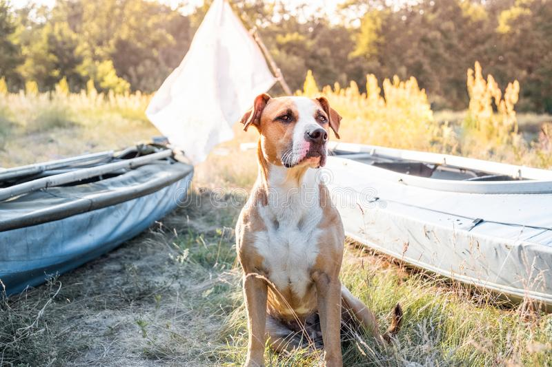 A dog sits in front of canoe boats in beautiful evening light. royalty free stock photography