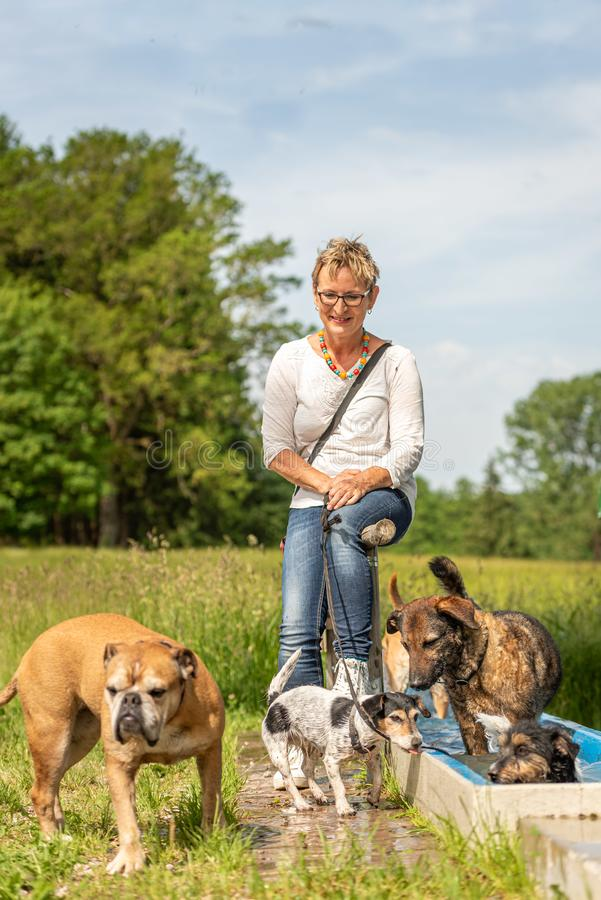 Dog sitter is resting with many dogs by the water. Dog walker with different dog breeds in the beautiful nature stock photo