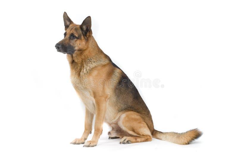 Dog Tricks Free Download
