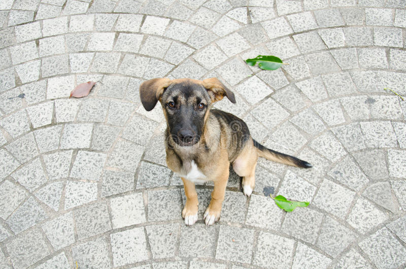 Dog sitting on the brick floor.