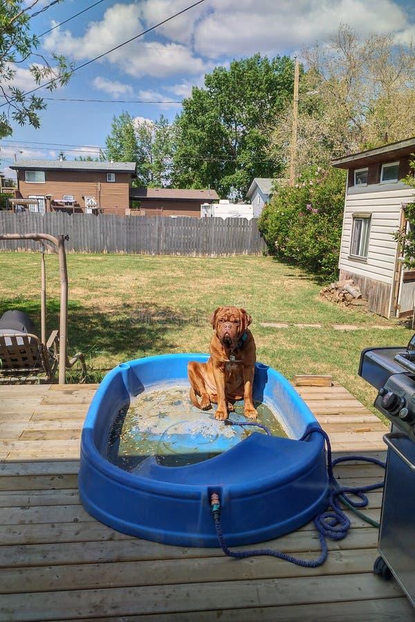 Dog sitting in empty paddling pool royalty free stock image