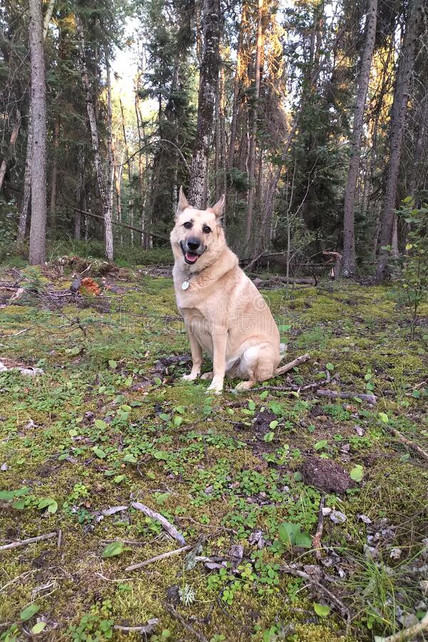Dog sitting in the forest stock photos