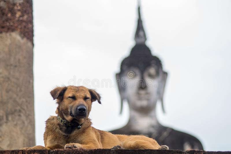 Dog lying in front of a buddha statue stock images