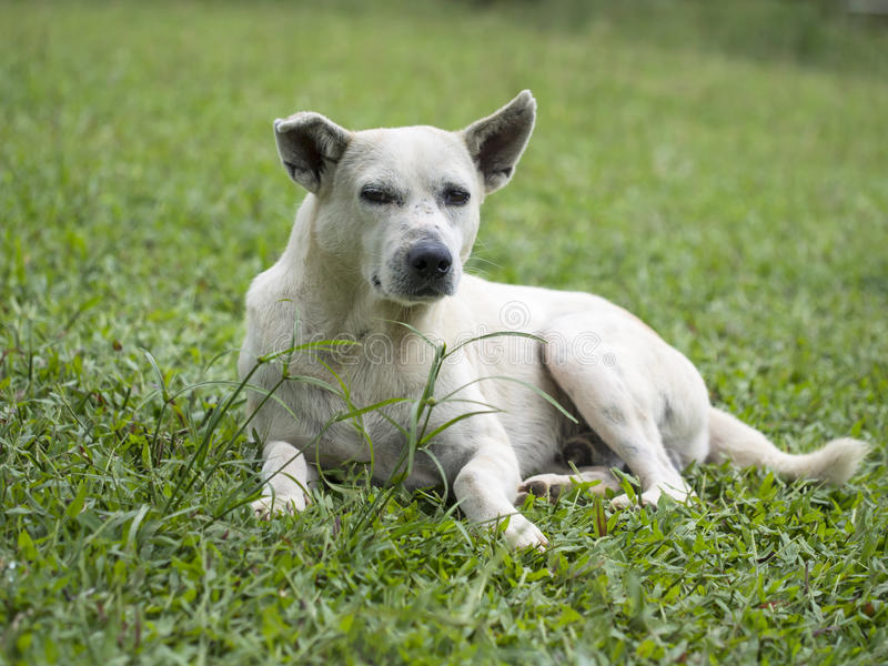 The dog sitting in grass stock photography