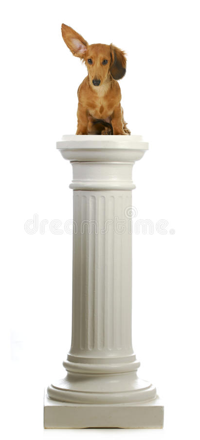 Dog sitting on a pedestal stock photo