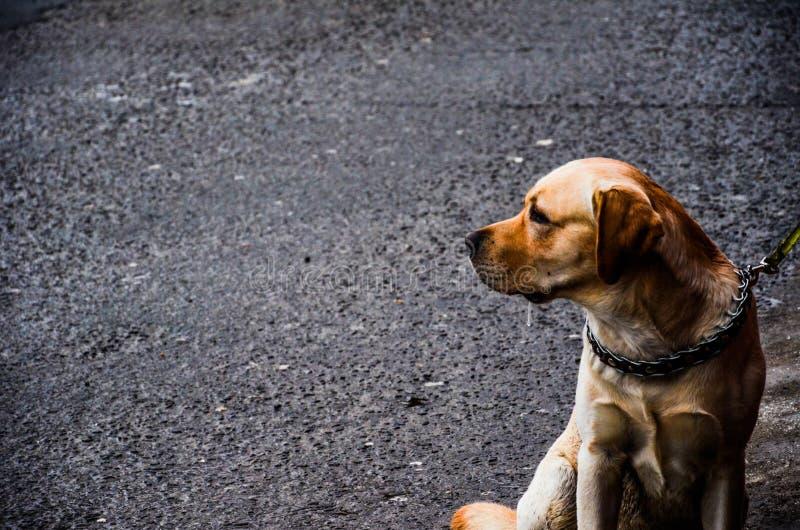 Dog sitting on street stock image
