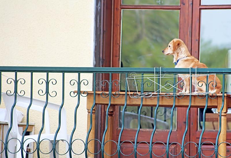Dog is sitting on the table and waiting for his hosts stock images