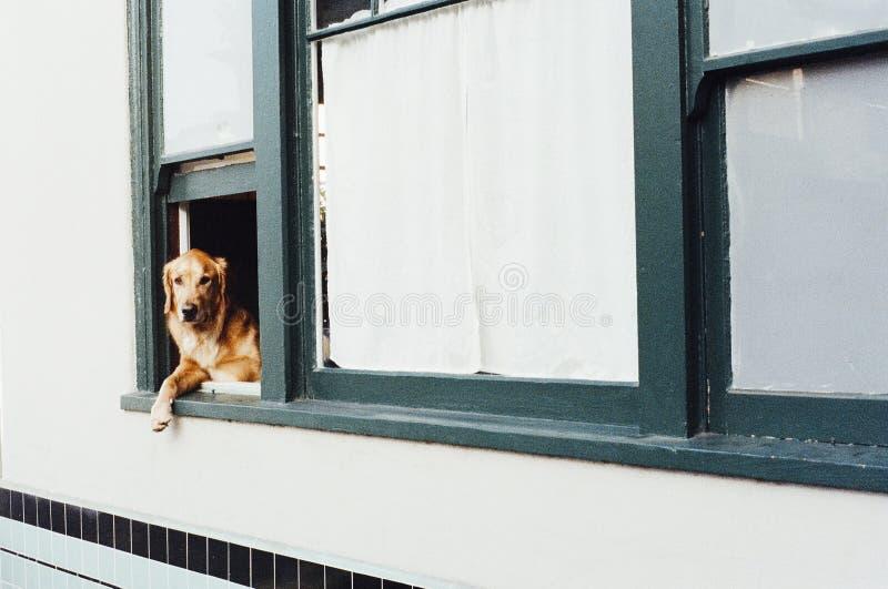 Dog Sitting On Window Free Public Domain Cc0 Image