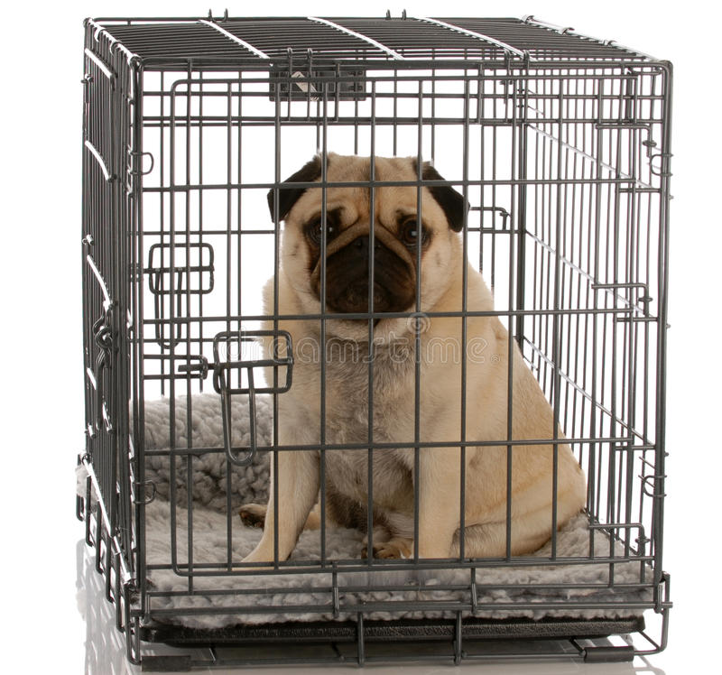 Dog sitting in wire crate stock image